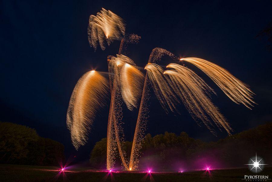 Goldregen als Feuerwerk